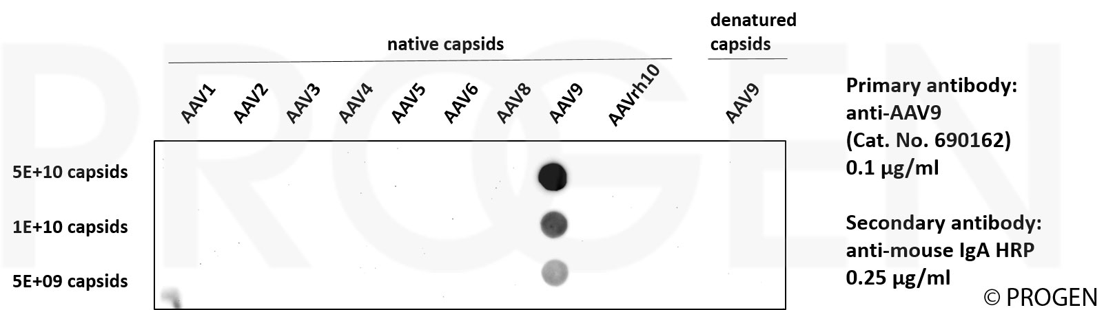 anti-AAV9 (intact particle) mouse monoclonal, ADK9, liquid, purified, sample