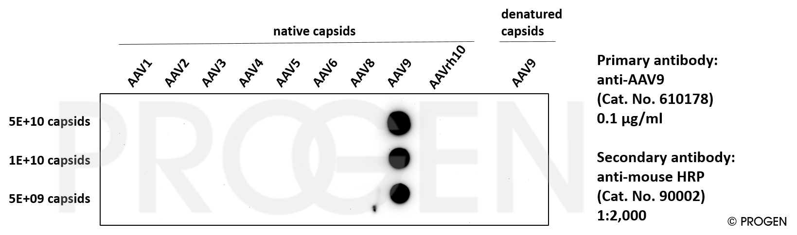 anti-AAV9 (intact particle) mouse recombinant, ADK9-1R, lyophilized, purified, sample