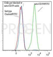 anti-CD59 mouse monoclonal, Bra10G, purified