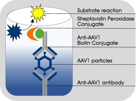 AAV1 Titration ELISA