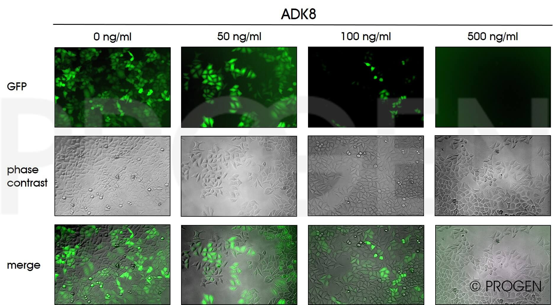 anti-AAV8 (intact particle) mouse monoclonal, ADK8, lyophilized, purified, sample