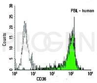 anti-CD36 mouse monoclonal, EBS-CD-023, purified