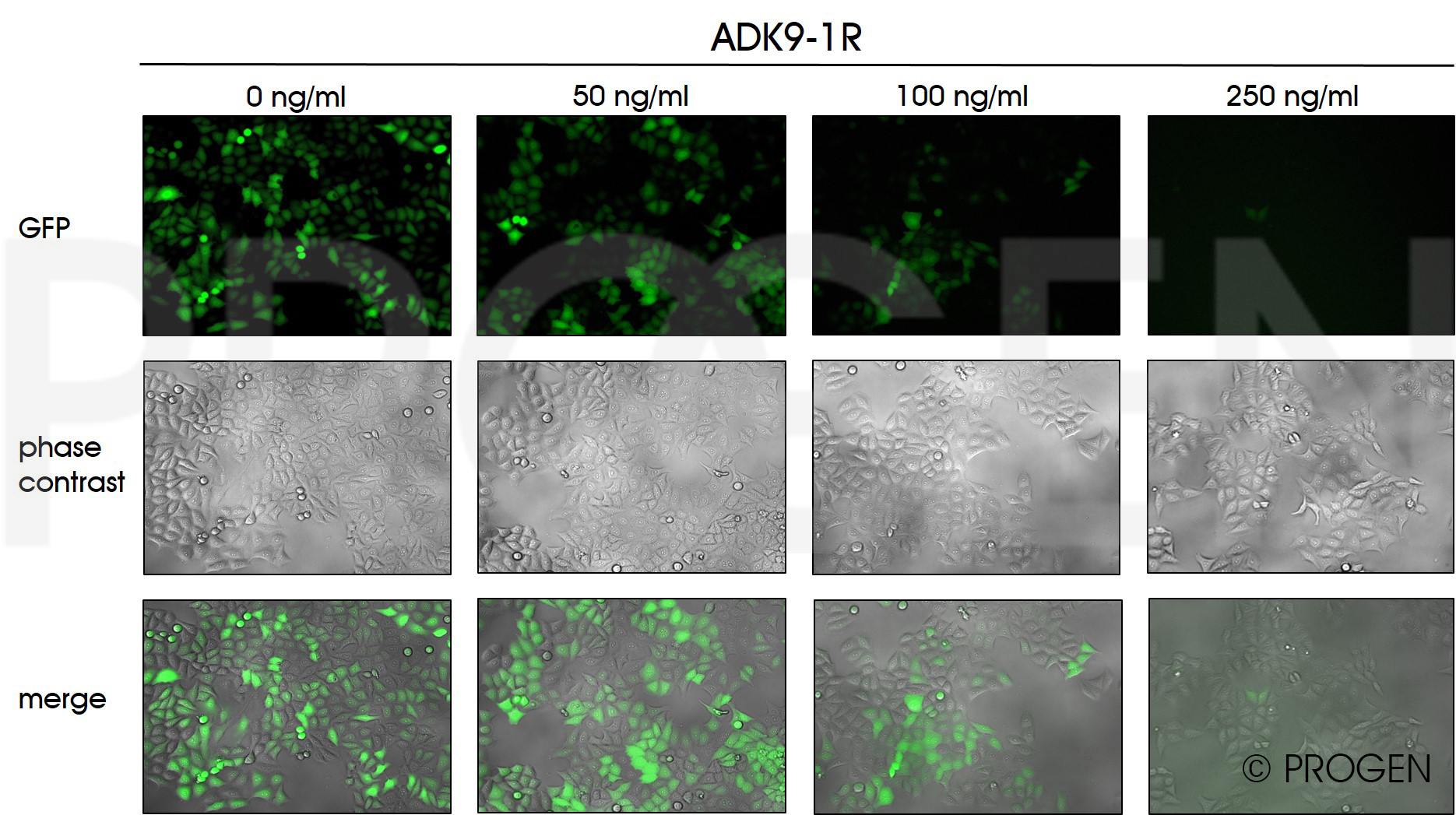 anti-AAV9 (intact particle) mouse recombinant, ADK9-1R, lyophilized, purified